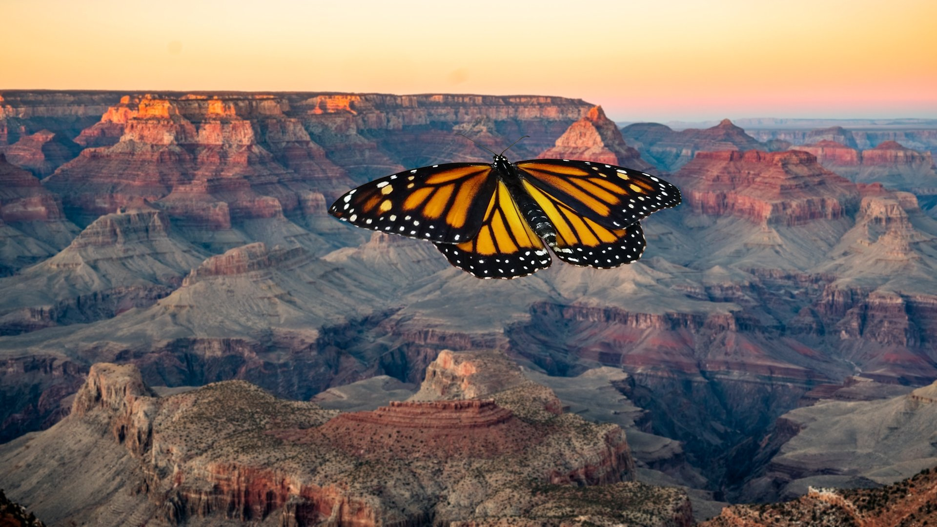 Image - Butterfly over the Grand Canyon